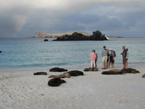 Sea lions laying on the beach and a rainbow in the distance