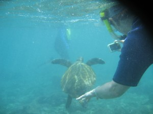 Our first encounter with a sea turtle