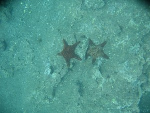 Multi colored starfish