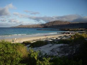 The sandy beach where the sea turtles lay their eggs