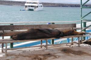 Sea lions sleeping on the dock