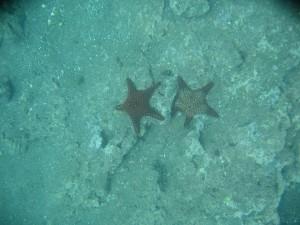 Multi colored starfish